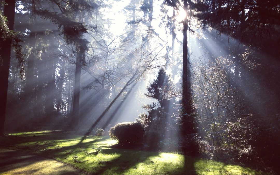 Los claros del bosque, Maria Zambrano a la luz de la lógica del no-todo